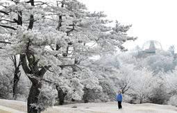 【六甲山に霧氷出現】兵庫北部はこの後も30センチの積雪予報